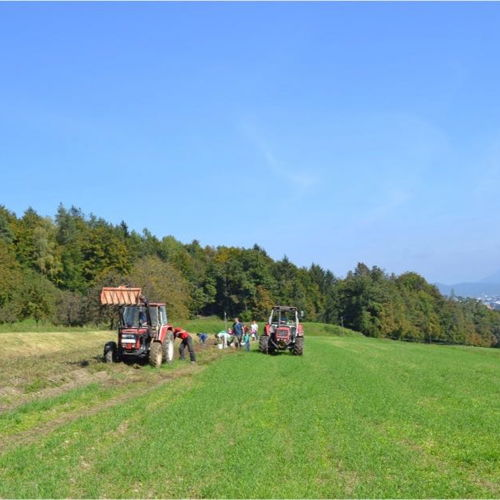 Bild zum Weblog ADWA Klagenfurt - Kartoffelernte